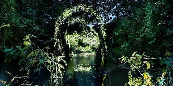 La Cara de la Amazonia