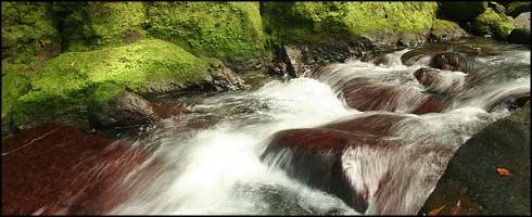 El río de los Salmos