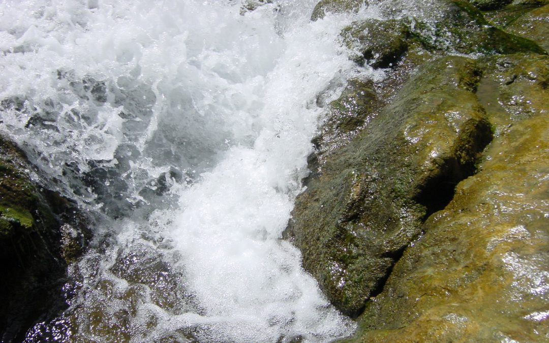 Todos al agua, nos insiste EL PAÍS