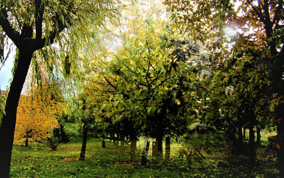 ¿Buscas este ambiente en El Espinar, incluso cuando anuncian la bajada de temperaturas?