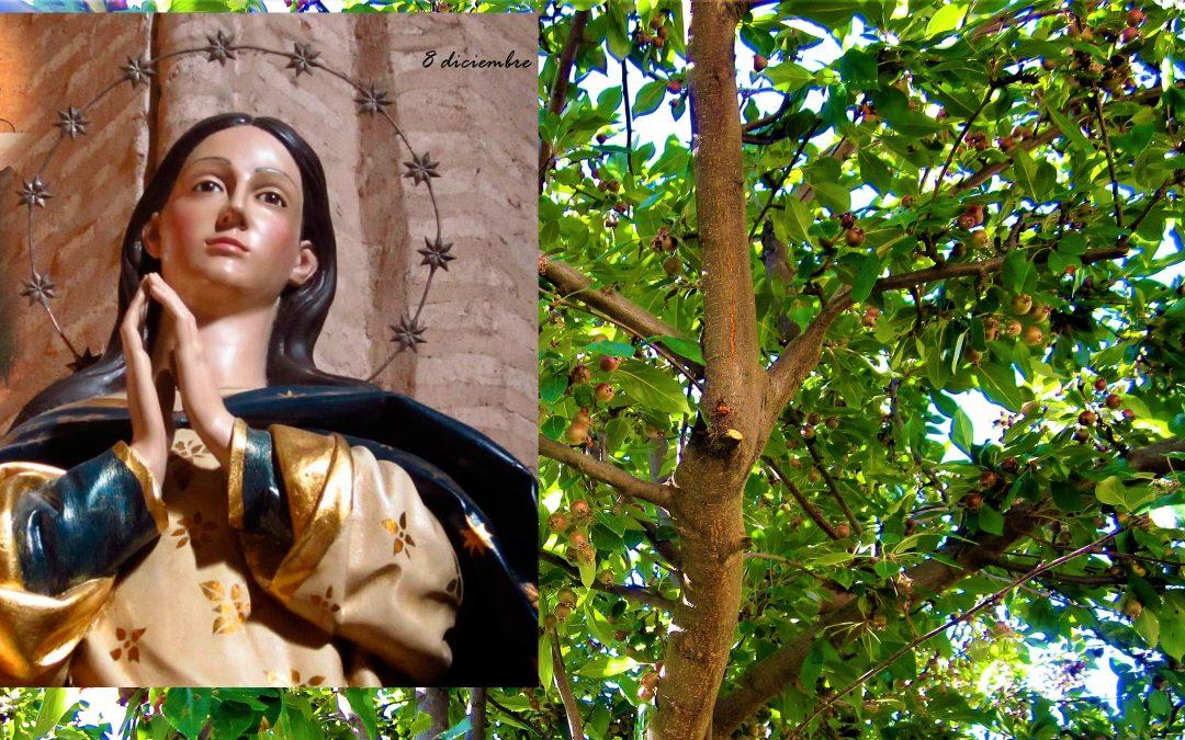 EUCARISTÍA EVD:  La Inmaculada